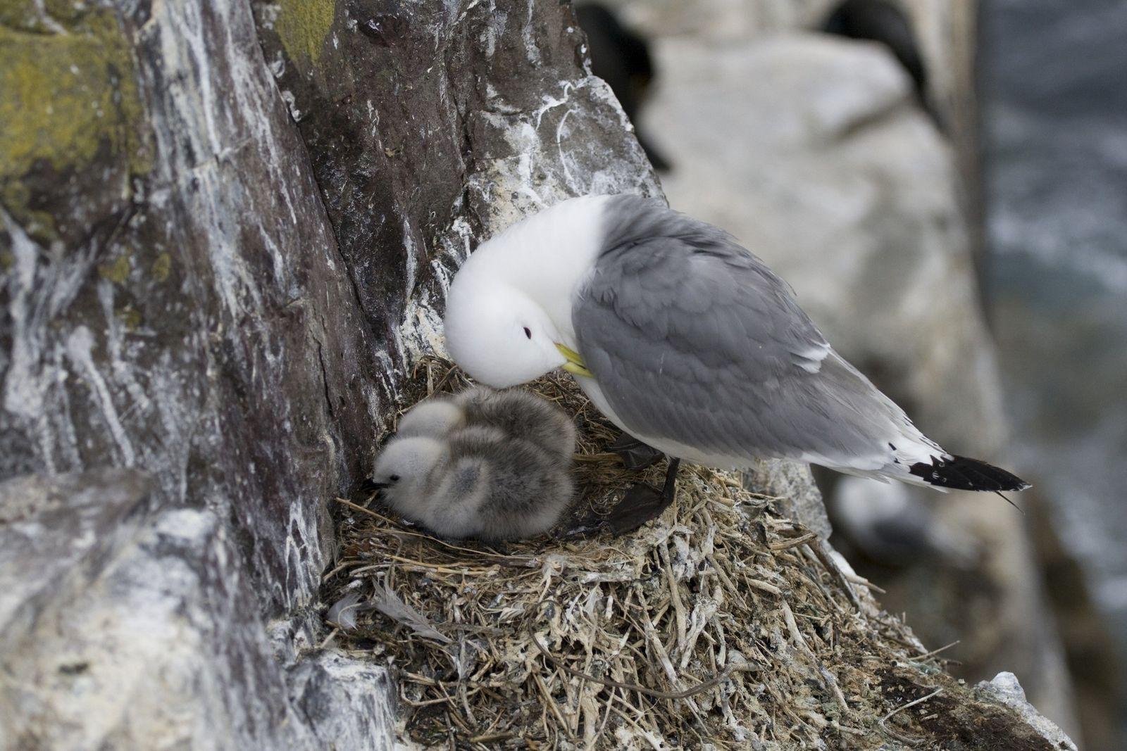 Descubren plástico en huevos del Ártico