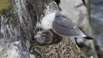 Descubren plástico en el interior de huevos de aves en el remoto océano Ártico