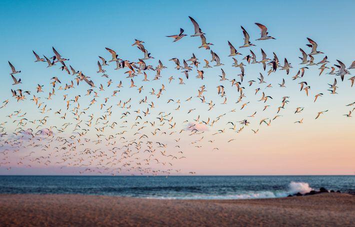 Bandada de aves migratorias