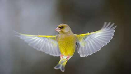 España, el segundo país de Europa con mayor variedad de especies de aves