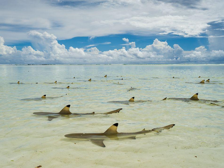 El atlas de los tiburones en imágenes
