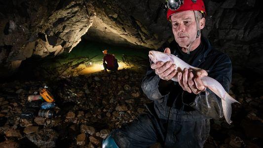 Descubren en la India el pez troglodita más grande del mundo