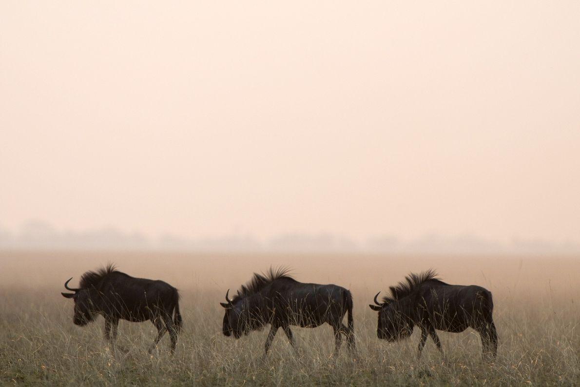 Parque Nacional de la llanura del Liuwa, Zambia