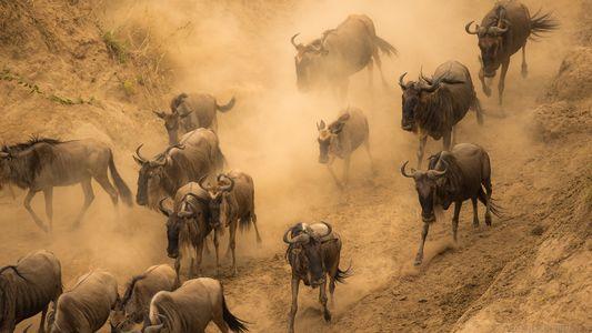 Fotografías de animales salvajes alrededor del mundo