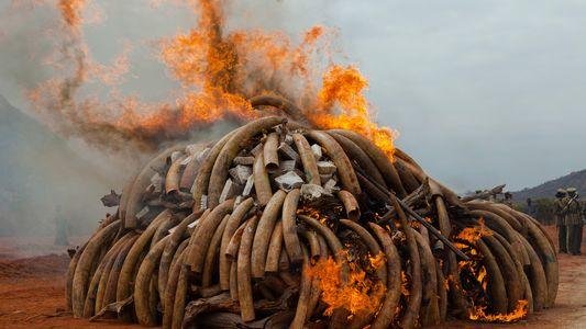 Dentro del perturbador mundo del tráfico de fauna silvestre