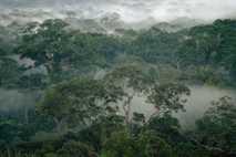 Gunung Palung