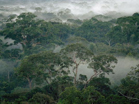Las termitas ayudan a las selvas a sobrevivir al cambio climático