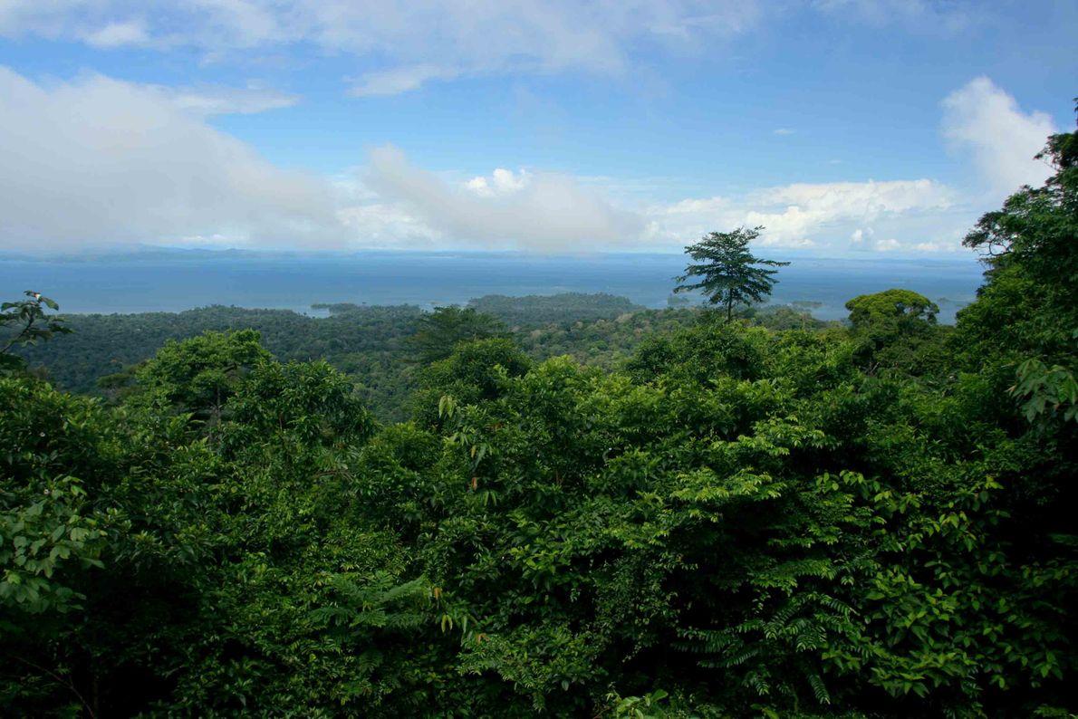 Reserva Natural de Brownsberg, Surinam