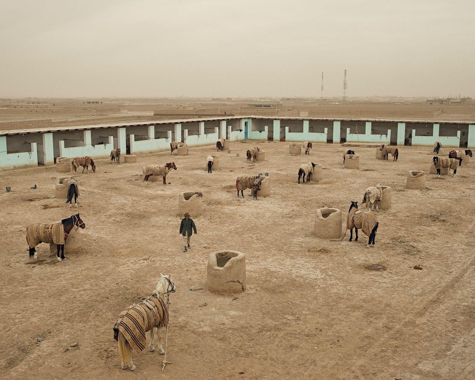 Los caballos descansan en los establos