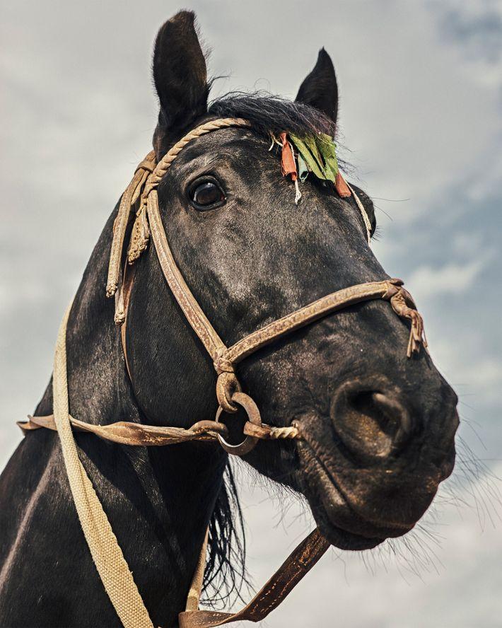 El caballo Qara