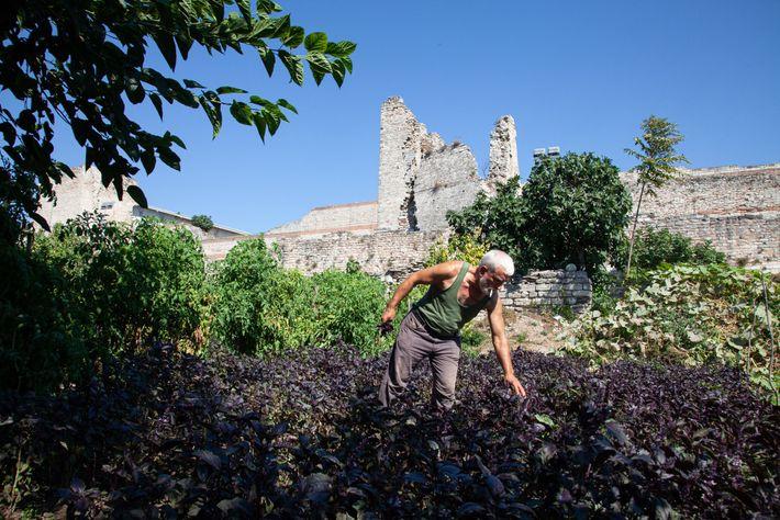Un agricultor trabaja en un huerto