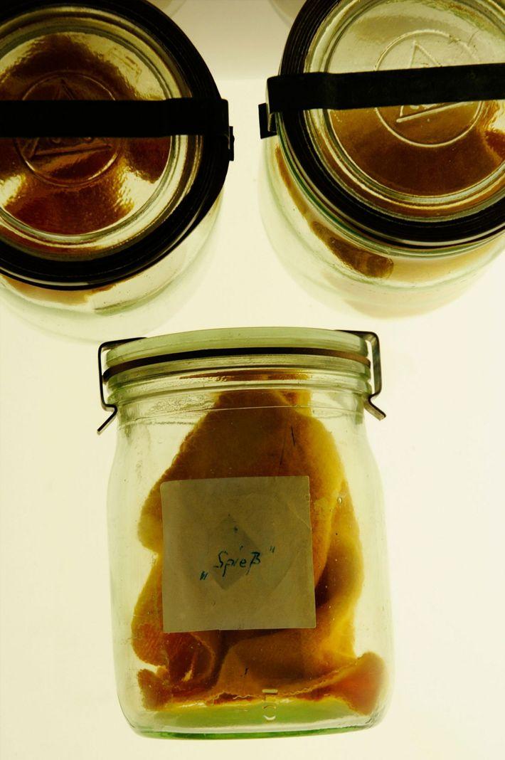 Muestras de olor de sudor humano en un tarro de cristal exhibido en el Museo de ...