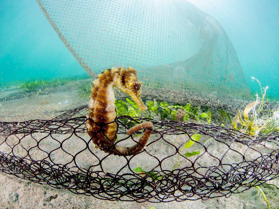 La agonía del Mar Menor: así hemos llegado a su colapso ecológico
