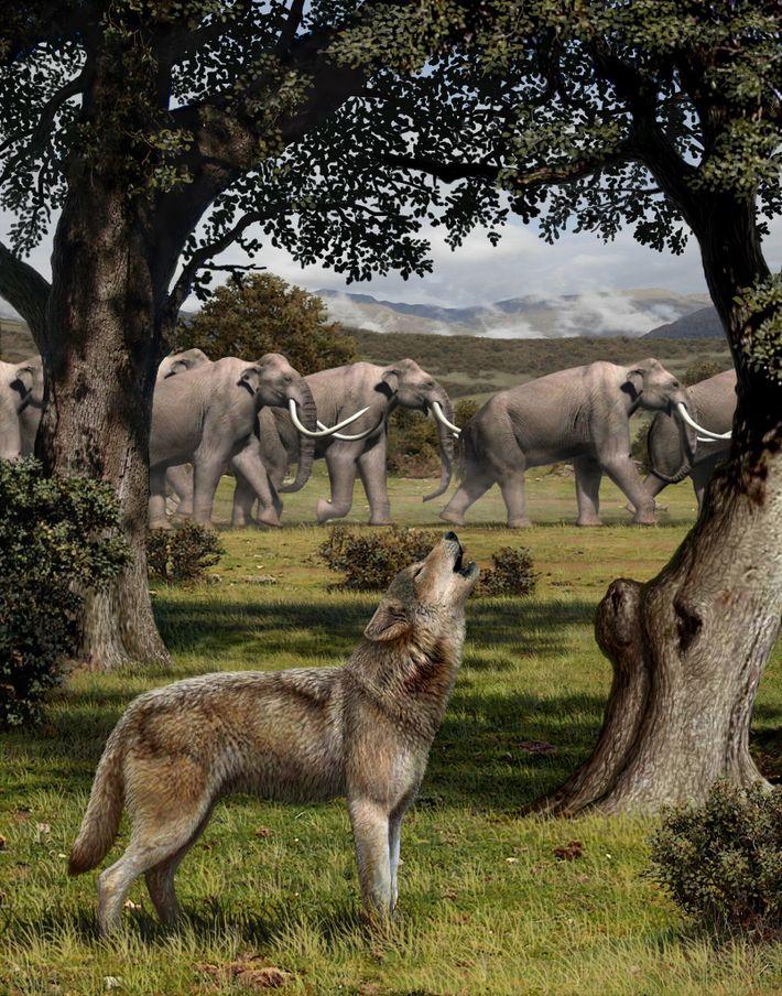 Una reconstrucción del Canis dirus