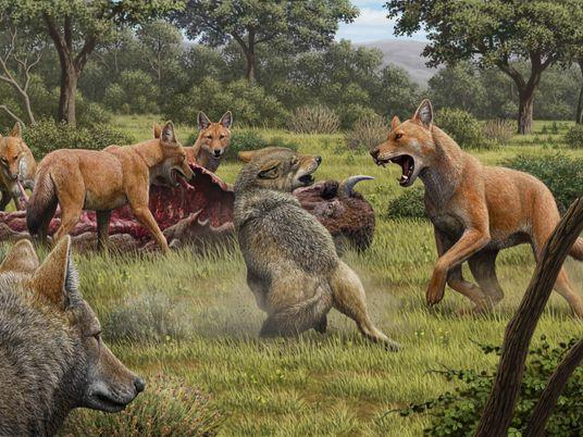 La secuenciación del ADN del lobo terrible revela que era un animal más extraño de lo ...
