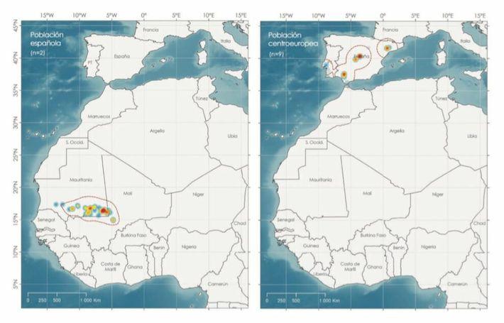 Cigüeñas zonas de invernada España y Centroeuropa