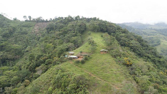 La región colombiana de Caquetá está considerada como una puerta a la Amazonia. Sus condiciones climáticas, ...