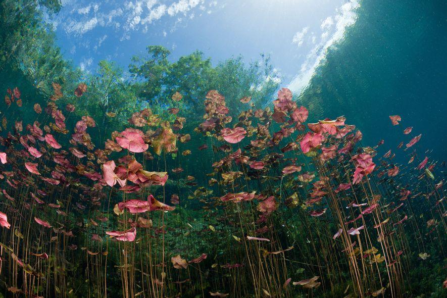 Cenote «Car Wash»