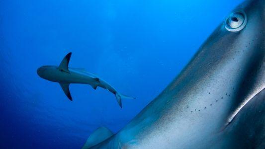 Este fotógrafo promueve la conservación de los océanos a través de sus imágenes