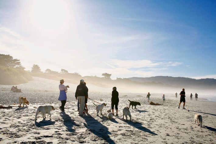 Imagen de perros y sus dueños en Carmel City Beach en Carmel, California