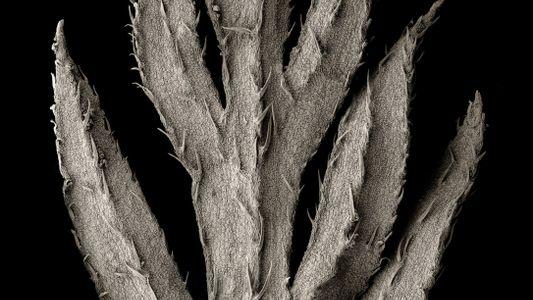 La belleza oculta de las plantas que alimentan al mundo
