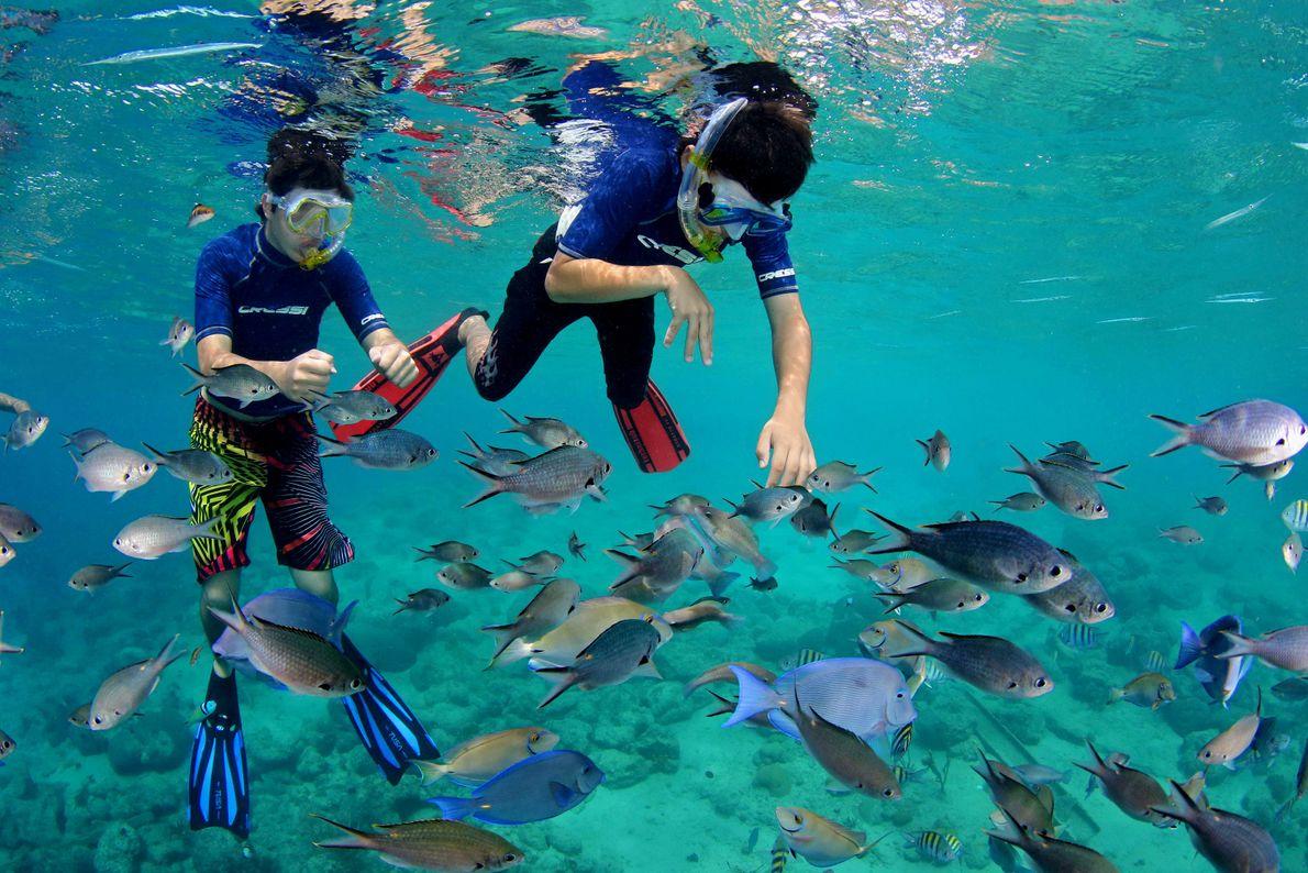 Imagen de buceadores con peces en la playa Cas Abao, Curaçao
