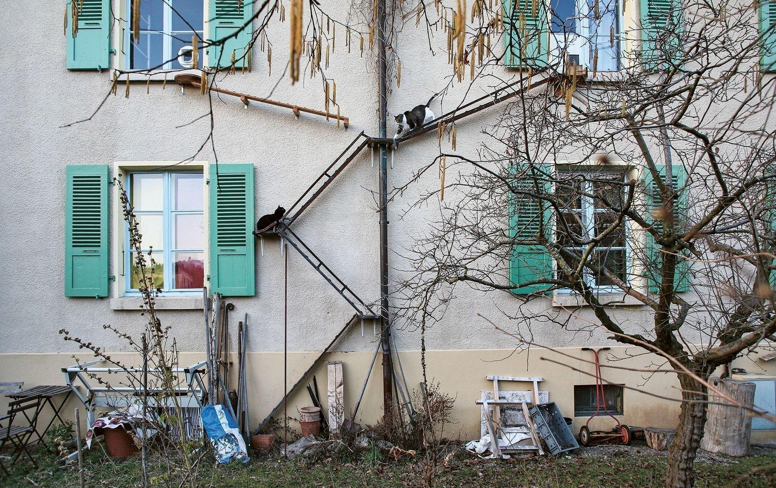 Suiza, el lugar donde los gatos tienen escaleras propias