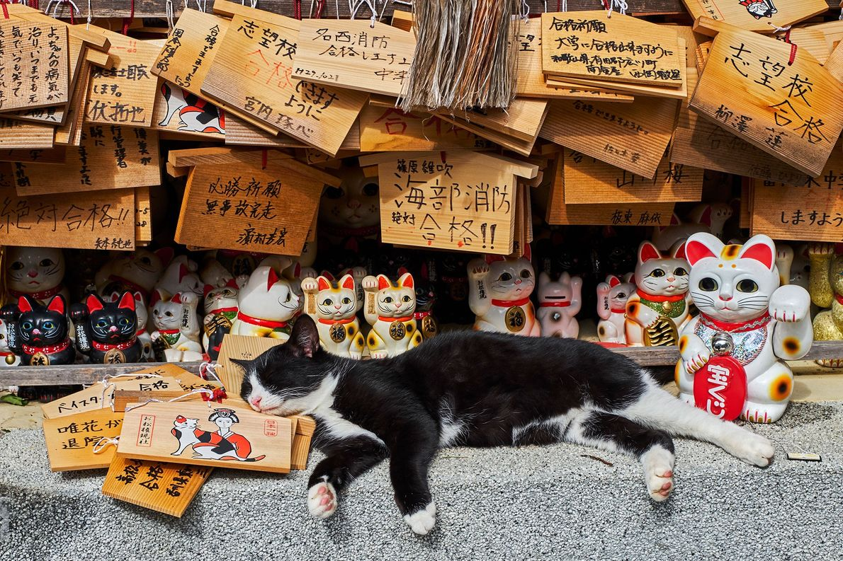 Gato en Japón