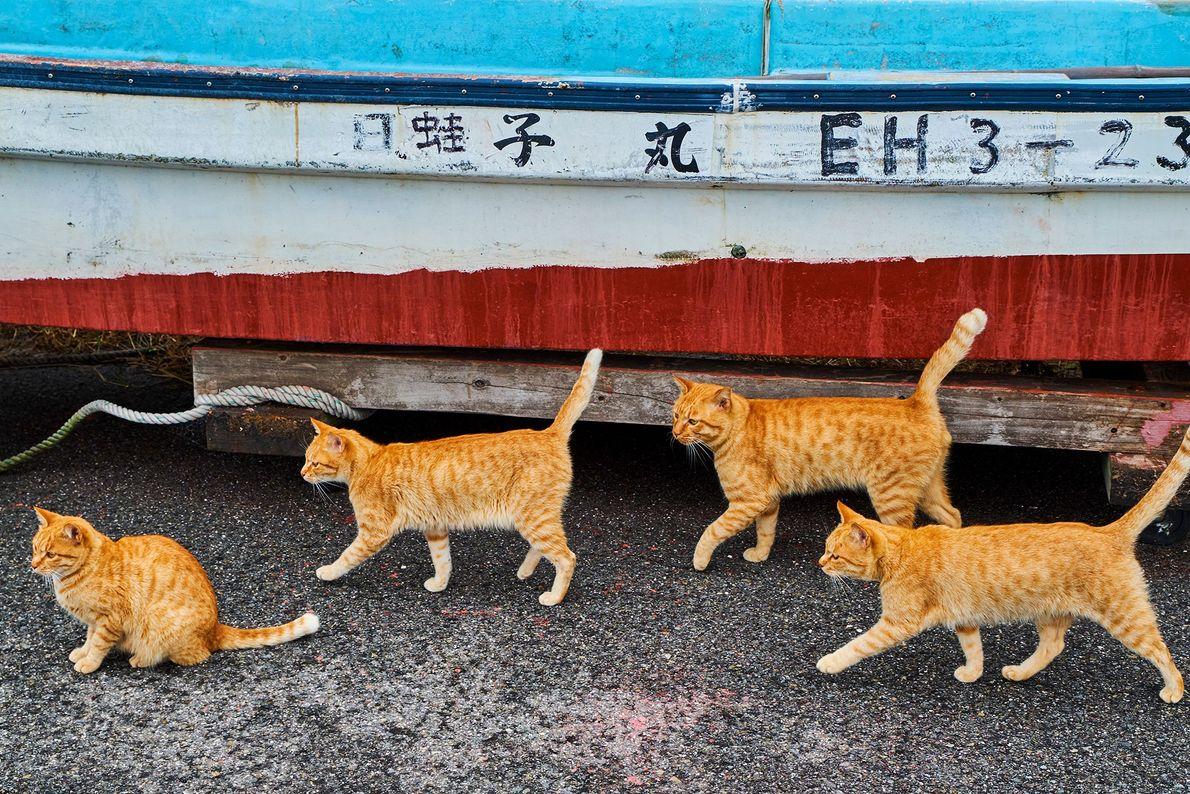 Gatos de Japón