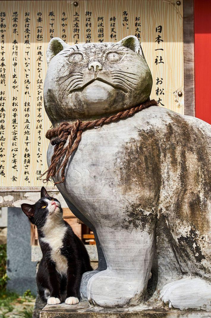 Templo de gatos