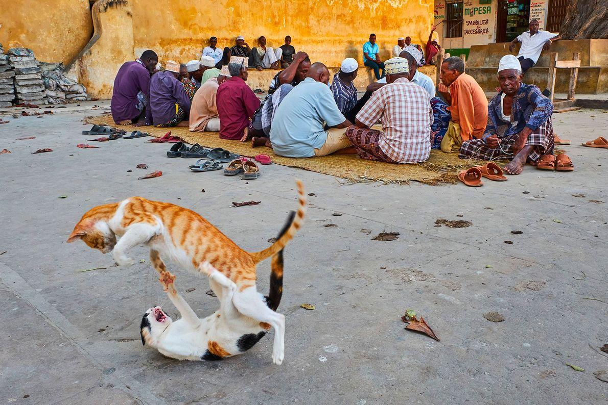 Gatos de Lamu