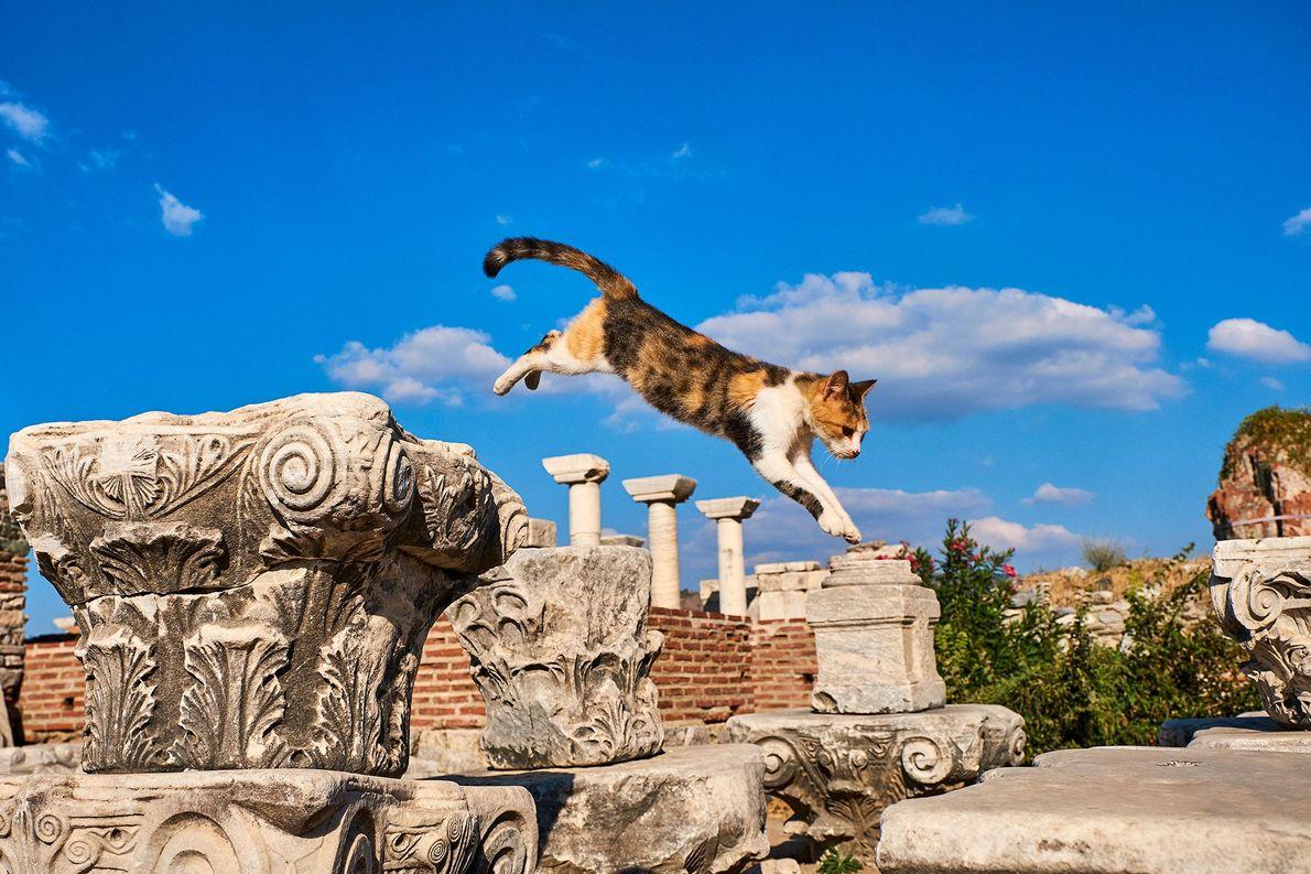 Gato en Éfeso