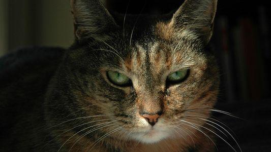 A algunas personas se les da mejor descifrar las expresiones felinas