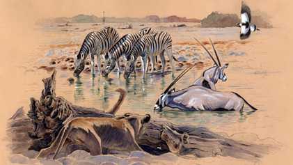 Dibujando entre leones, la exposición de una aventura artística en el corazón de Namibia