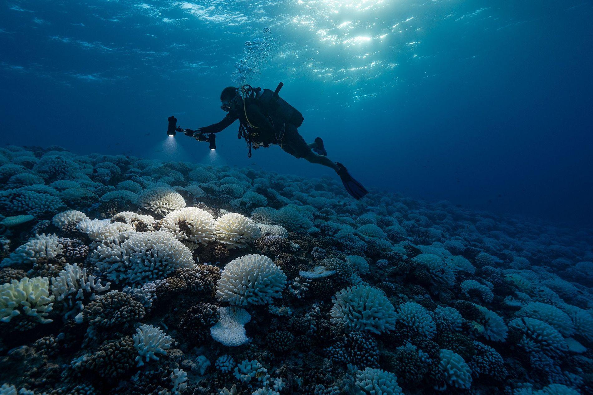 Arrecife de coral