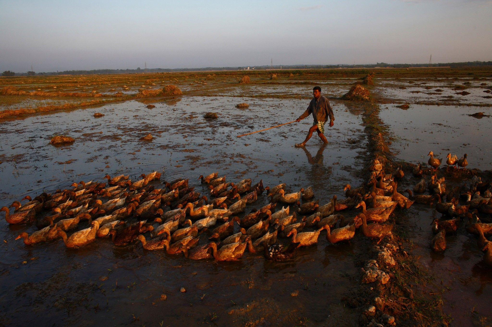 Bill Gates inicia una campaña para ayudar al mundo a adaptarse al cambio climático | National Geographic