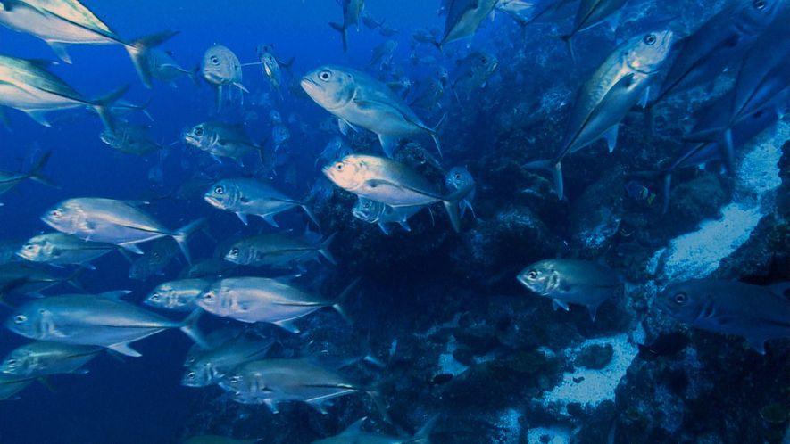 Fracasa el acuerdo para proteger las aguas de la Isla del Coco