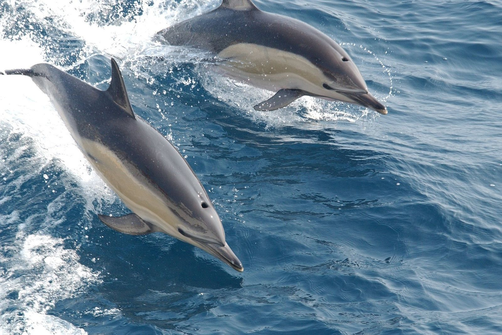 Plastificantes en delfines 01