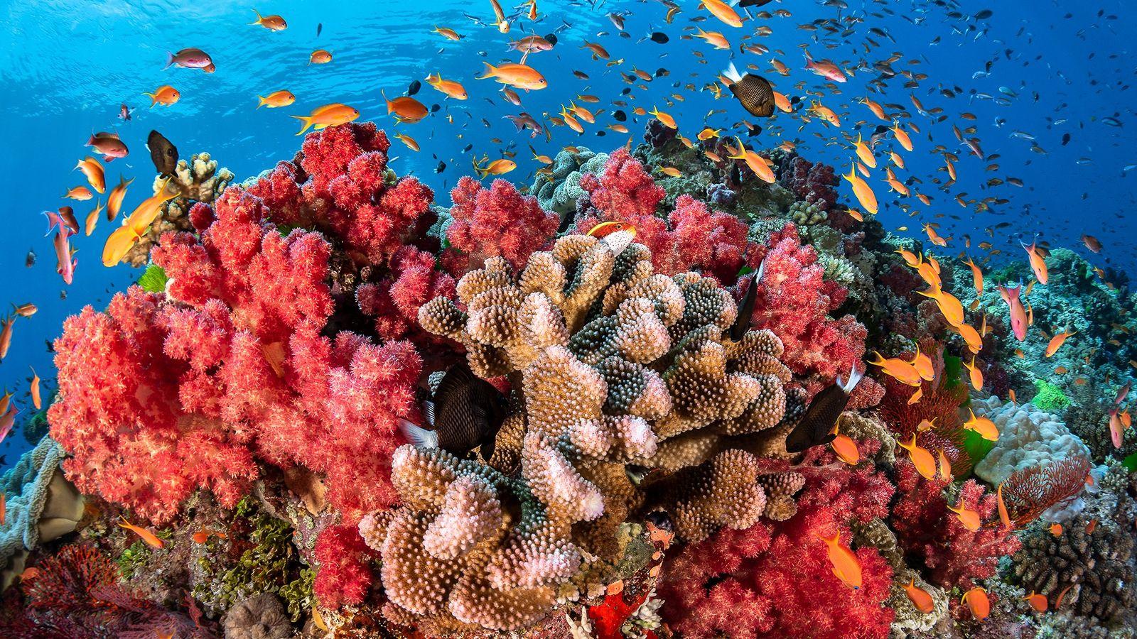 Arrecifes de coral de Fiji