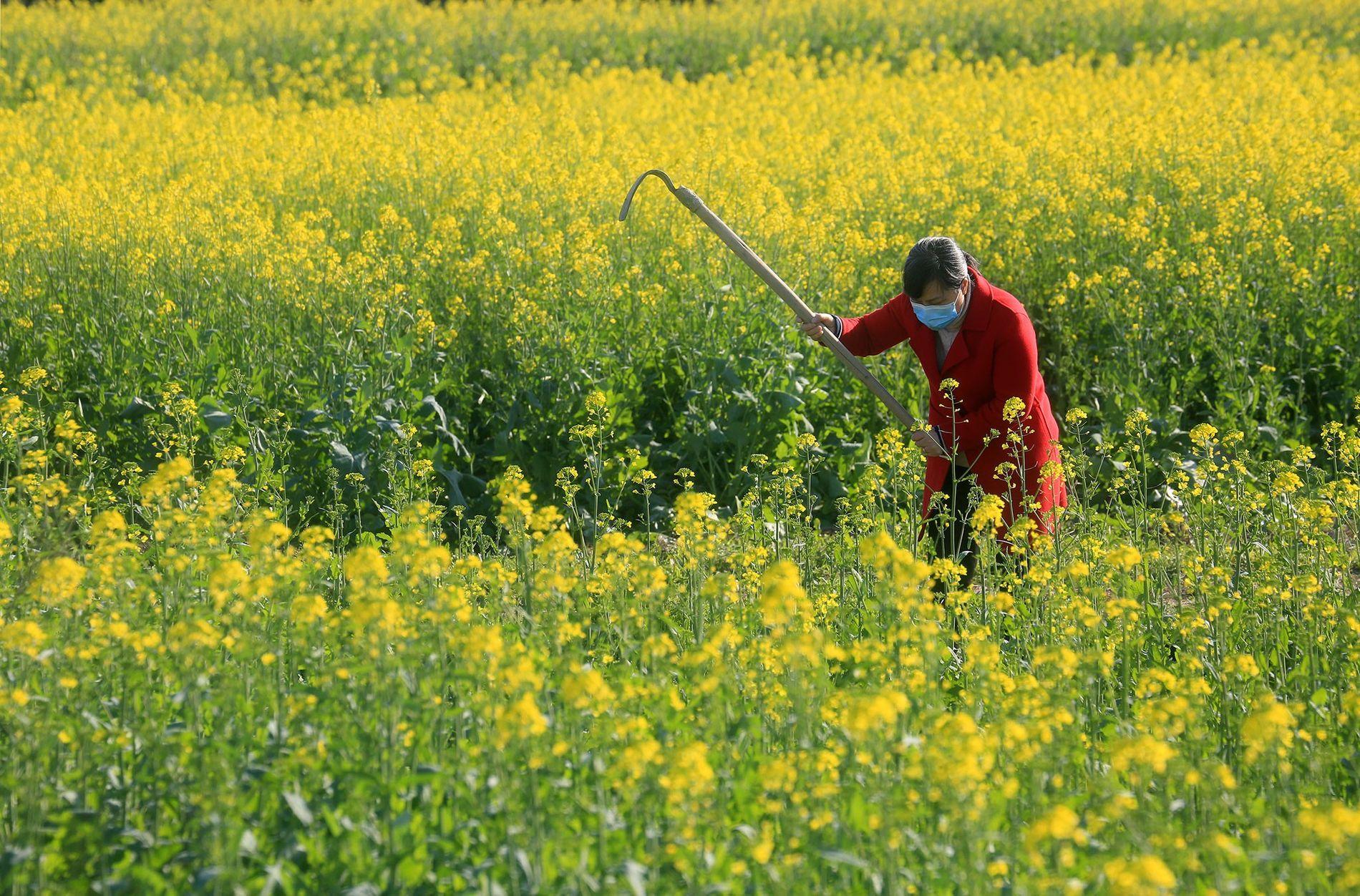 Agricultora, Jiangxi