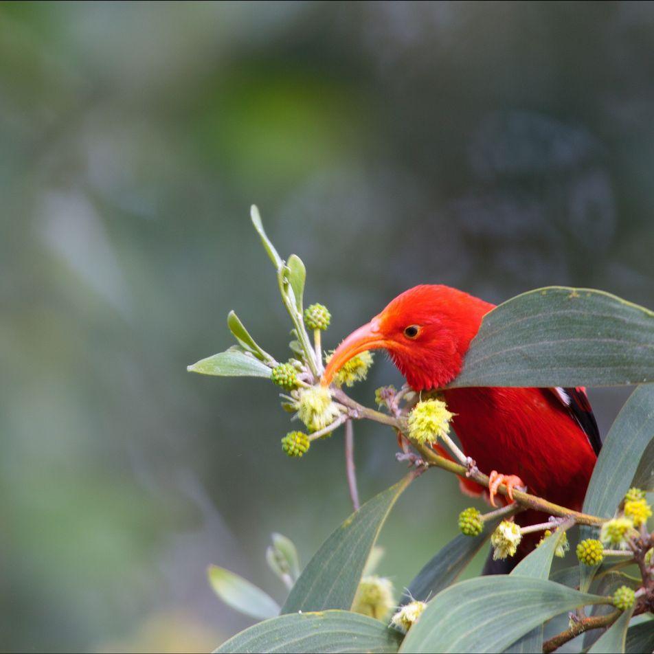El cráneo de estas aves podría ser la clave de su éxito evolutivo