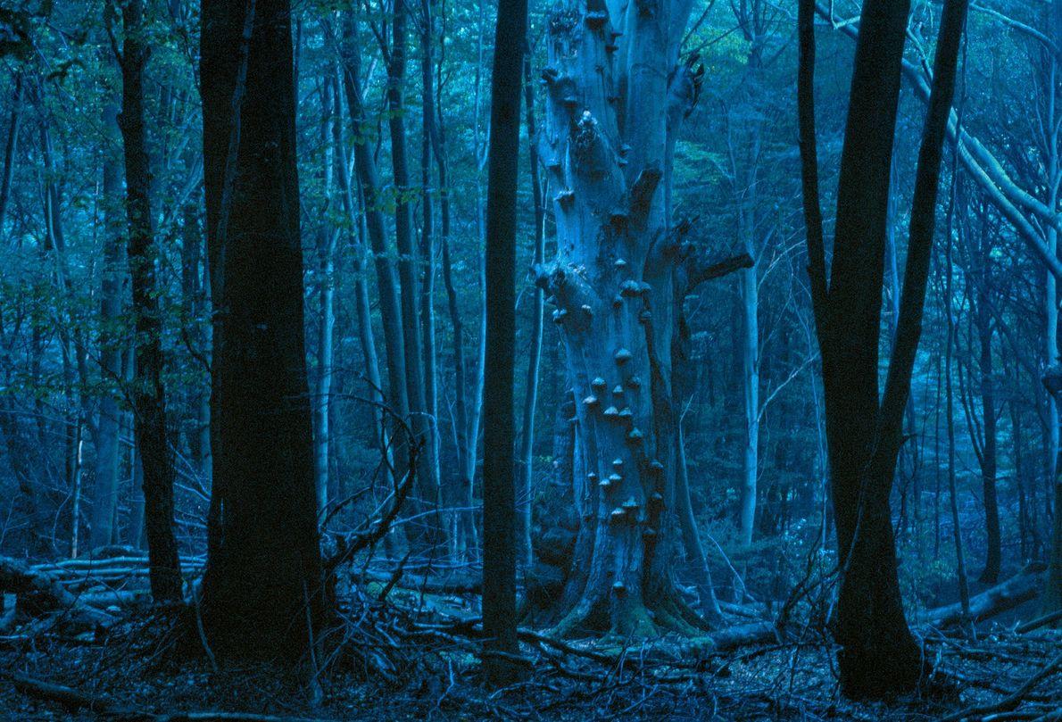 Bosque de Reinhard
