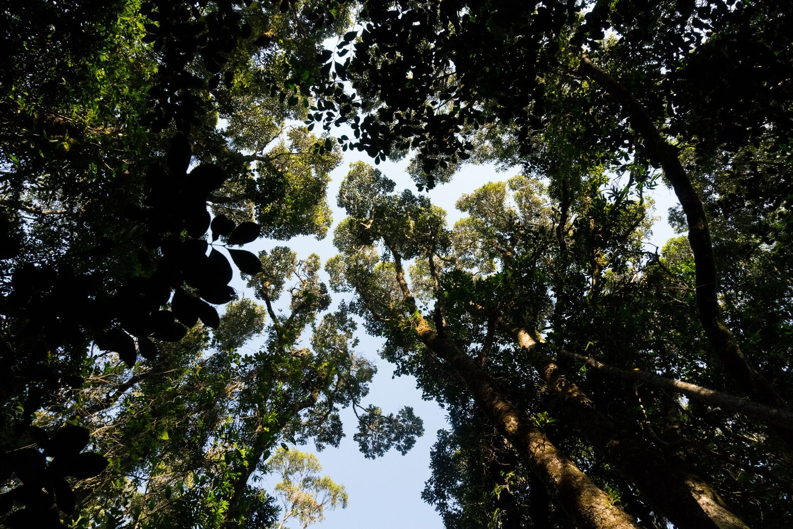 Árboles del parque nacional de Ranomafana