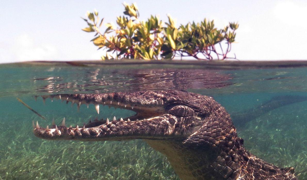 He buceado con tiburones en muchas ocasiones, pero esta era la primera vez que hacía esnórquel …