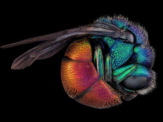 13 impresionantes y premiadas fotos microscópicas