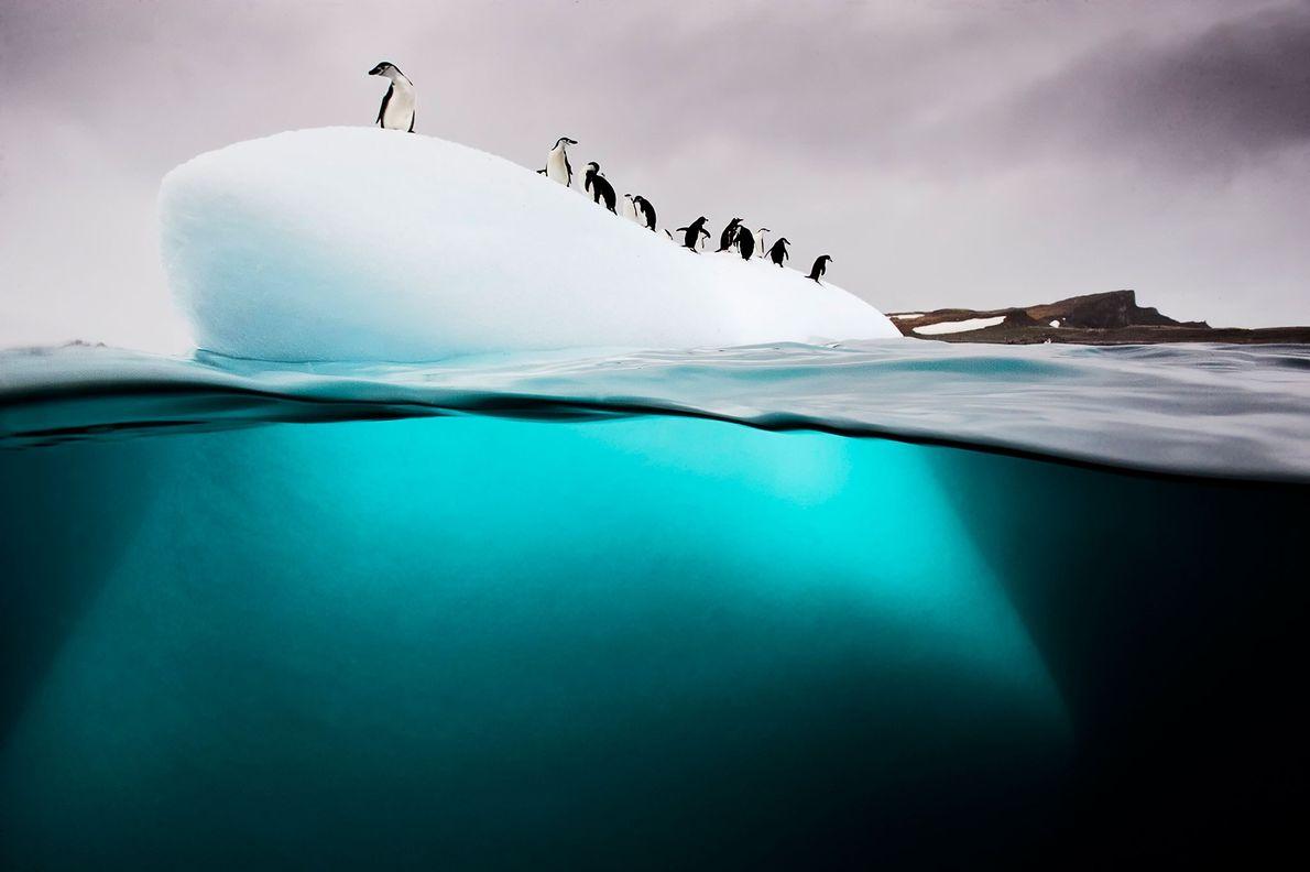 Pingüinos juanitos y barbijos