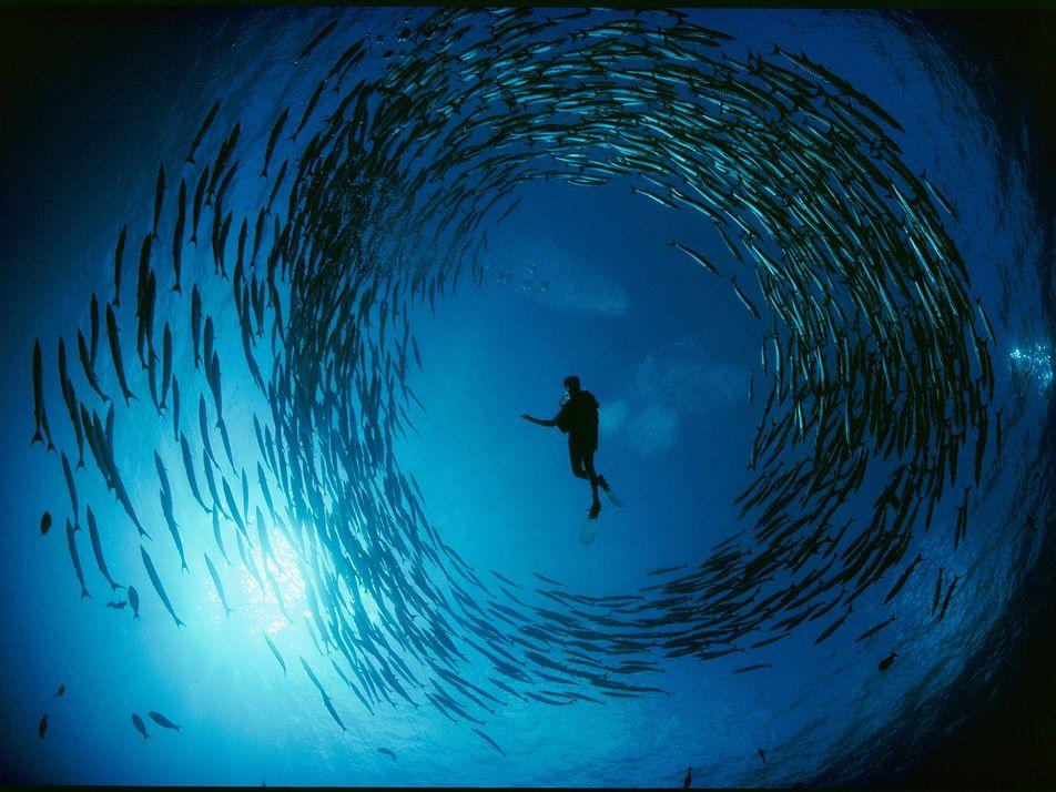 31 fotografías subacuáticas de David Doubilet