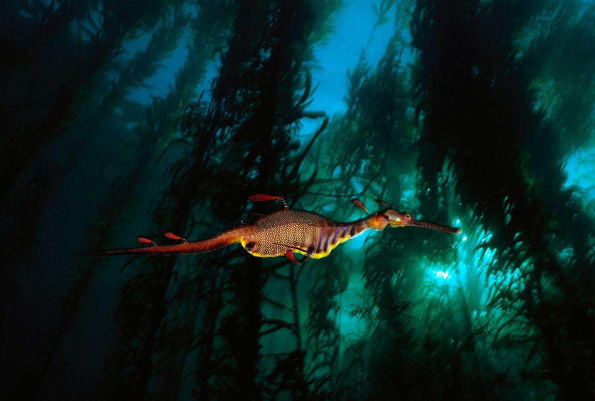 Un dragón de agua