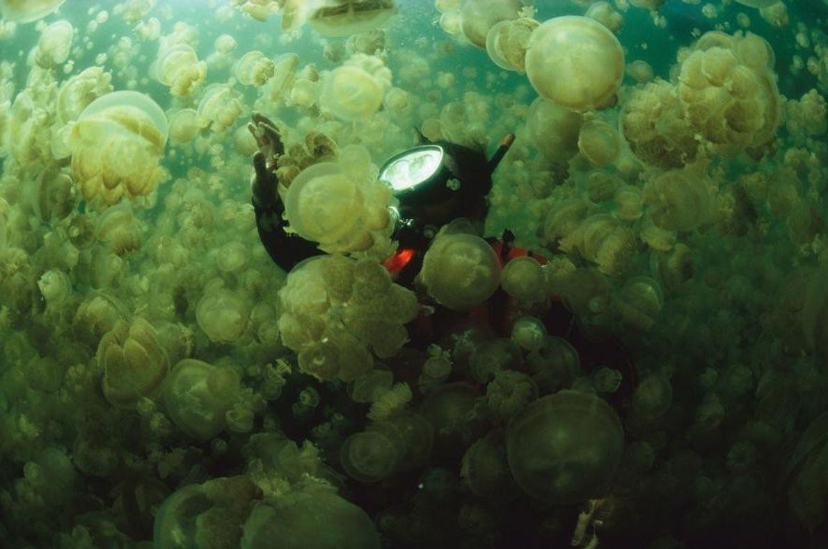 William Hamner entre medusas