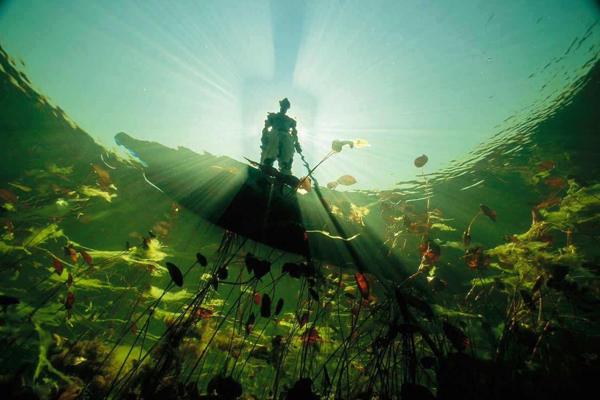 Pescador bayei